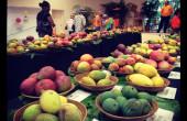Mango Festival!